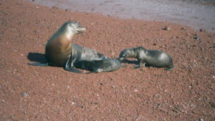 Photos from Galapagos Islands - Sea life and Lava</a>